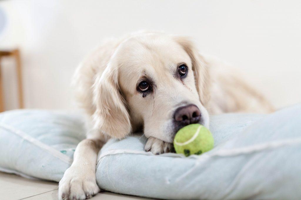 一張含有 狗, 室內, 牆, 坐 的圖片  自動產生的描述
