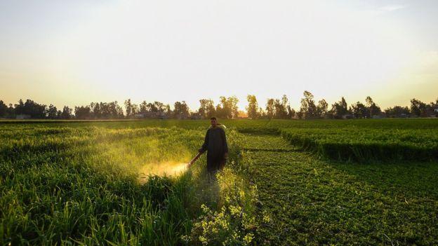 an spraying pesticide
