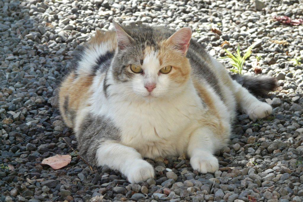 一張含有 貓, 地面, 室外, 岩石 的圖片  自動產生的描述