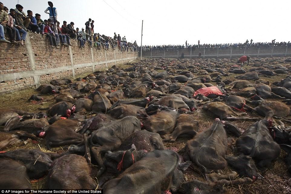 信徒圍觀屠殺儀式。 取自每日郵報