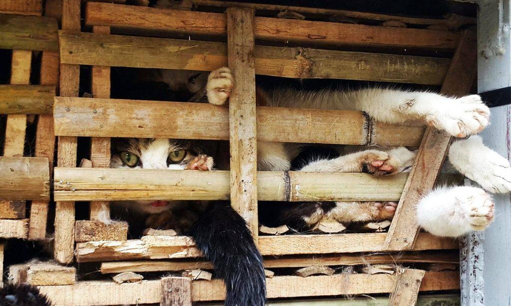 得深思的爪子:貓肉仍然是最重要的