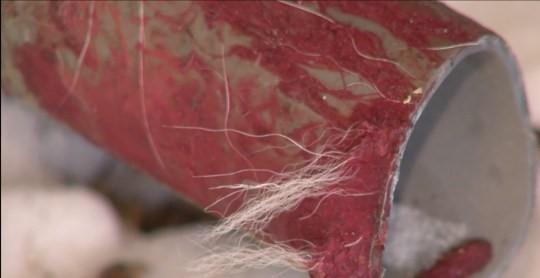 鐵棍與白色皮毛的遺骸