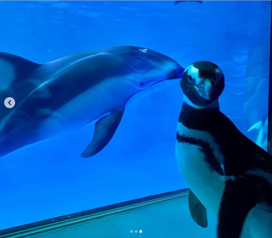 一張含有 動物, 鳥, 水, 坐 的圖片  自動產生的描述